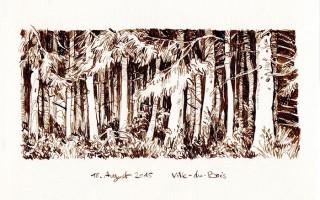 Forest of spruces in the Ardennes in Belgium, 2015 © Jan Philipp Schwarz