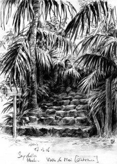 this is actually the entrance to a jungle on Praslin, Seychelles, 2006 © Jan Philipp Schwarz